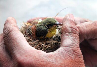Giornata Mondiale della Natura Selvatica