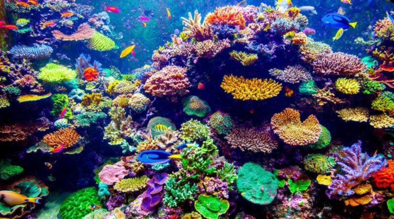 Il Fantastico Mondo dei Coralli